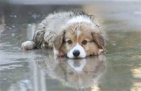 Il pleut :-(