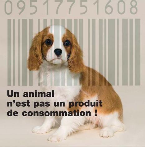 Un animal n'est pas un produit de consomation, remix-le pour le faire comprendre à tout le monde!