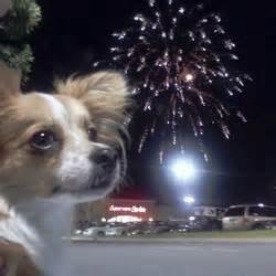 petit chien devant un feu d'artifice ^^
