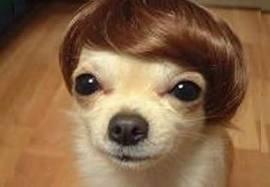 yo t'as vu je suis swag avec ma perruque ;-)