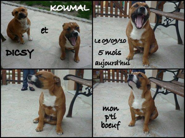 Koumal - le 09/09/2010 - 5 mois aujourd'hui !!!