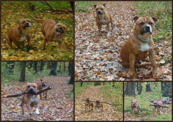 Mes BB en ballade, avec un super décor d'automne ... le 09/11/2010