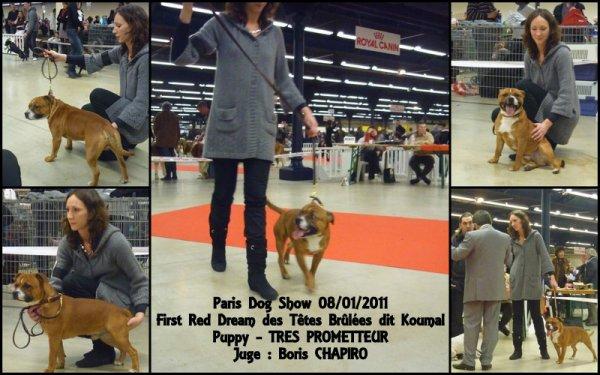 PARIS DOG SHOW 08/01/2011