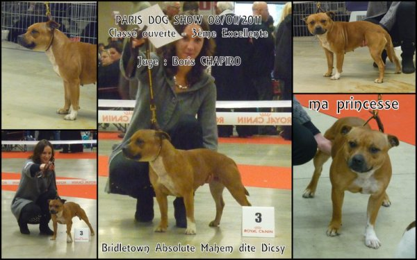 PARIS DOG SHOW 08/01/2011