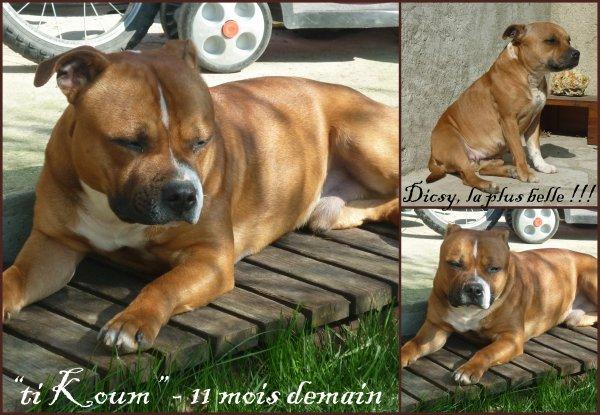 Les loulous, le 08/03/2011, profitent du soleil