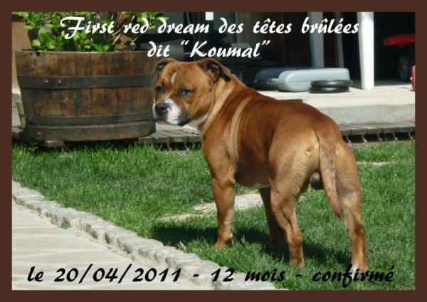 KOUMAL - confirmé  le 20/04/2011 - DISPONIBLE POUR SAILLIE