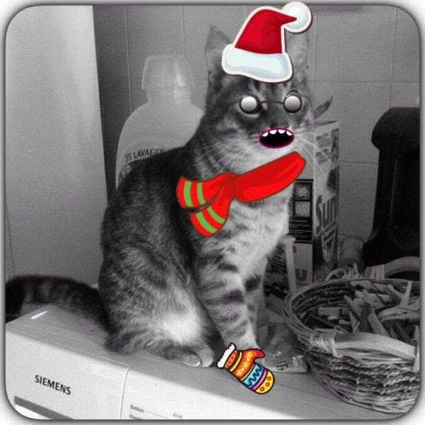 Mon chat se déguise !!!!