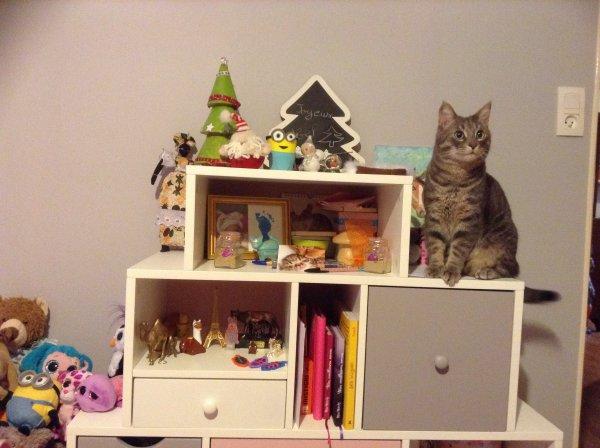 Mon chat monte partout !!!!