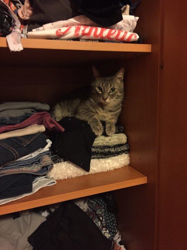 Où se cache mon chat ?