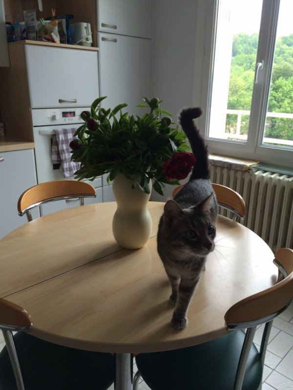 Mon chat veut être jardiner...