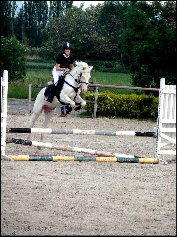 Mon poney ♥.