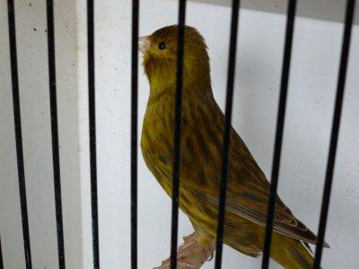 Brun jaune jeunes 2011