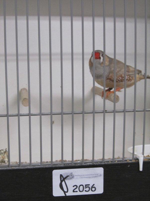 Male pastel gris à Mr WEERDHOF 89 pts