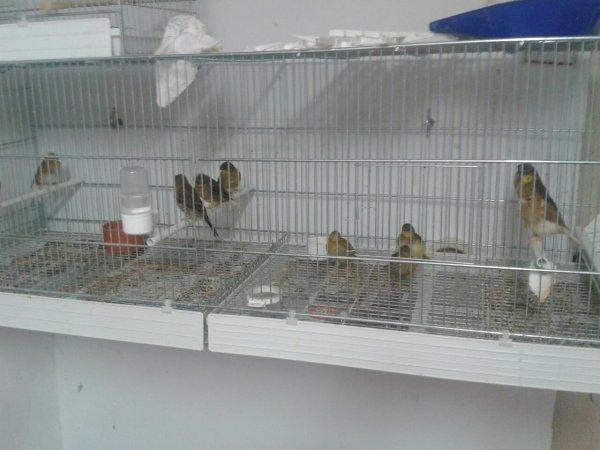 Quelque photos de mon élevage