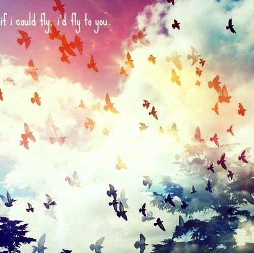 J'aimerais bien être un oiseau.