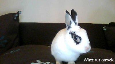 La raison de mon pseudo 'Winzie' :)