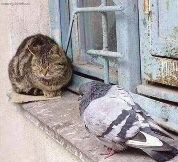 L'amitié double les joies et réduit de plus les peines