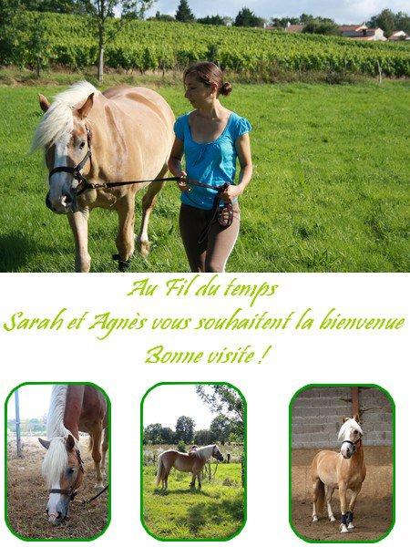Nouveau poney, Nouveau départ !