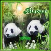 BISOUS:PANDAS
