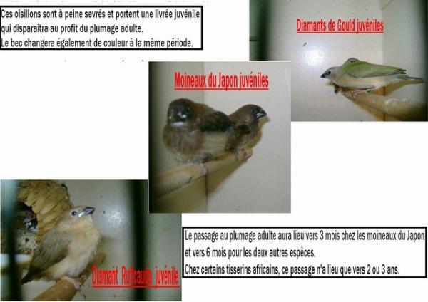 Oiseau à l'école