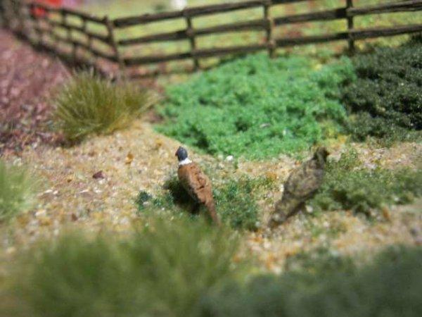 Mes plus petits oiseaux