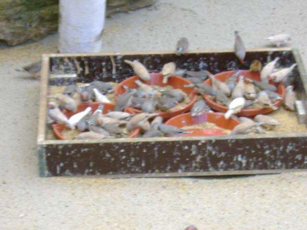 Pairi Daiza 2009 - Une serre-volière pleine de mandarins