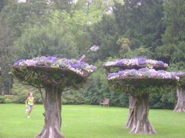 Compositions florales