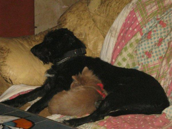 Quelle vie de chien !!!
