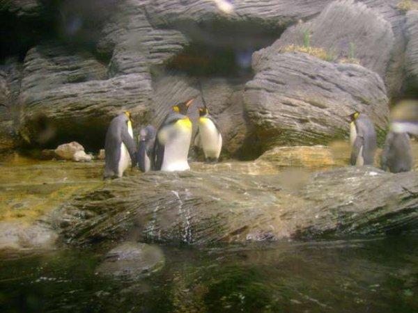 Zoo d'Anvers - d'autres oiseaux
