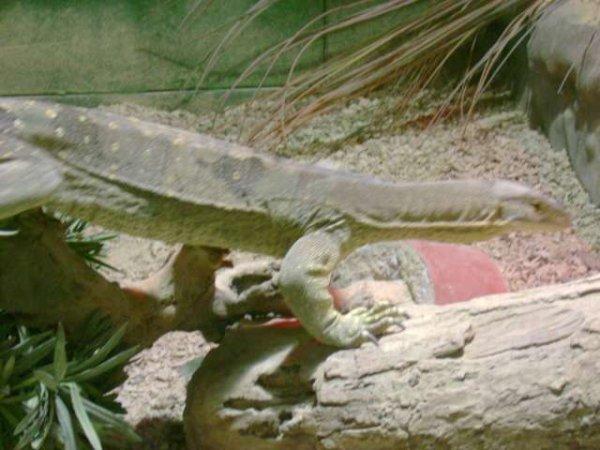 Planckendael 2009 - Reptiles