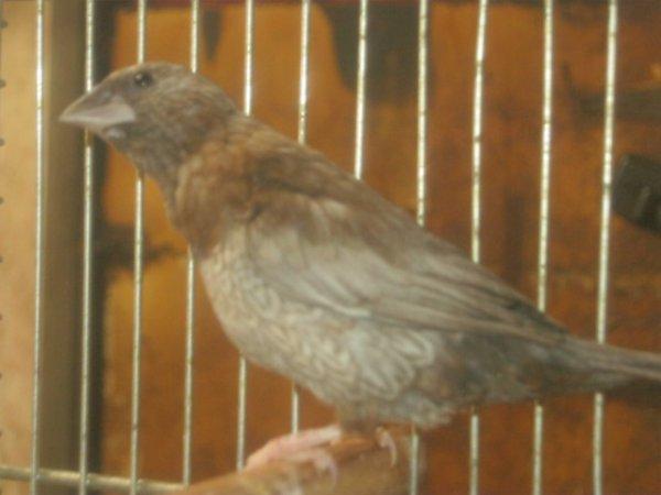 Un troisième de plus - Perlé brun