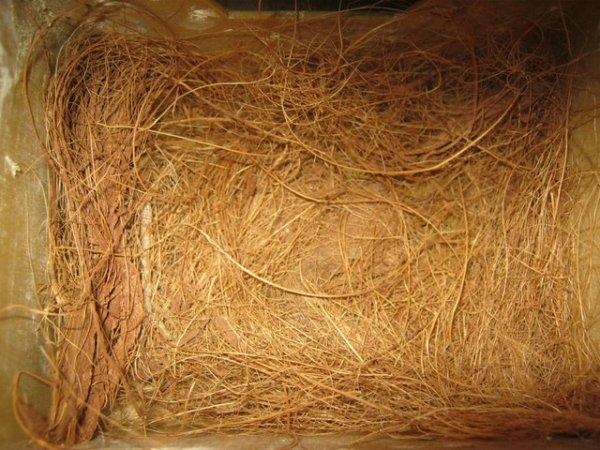 Nettoyage du nid et séance photo