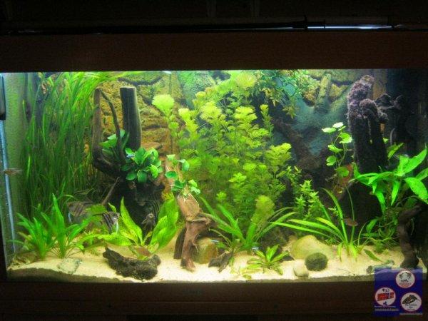 Aquariums - nouveau départ