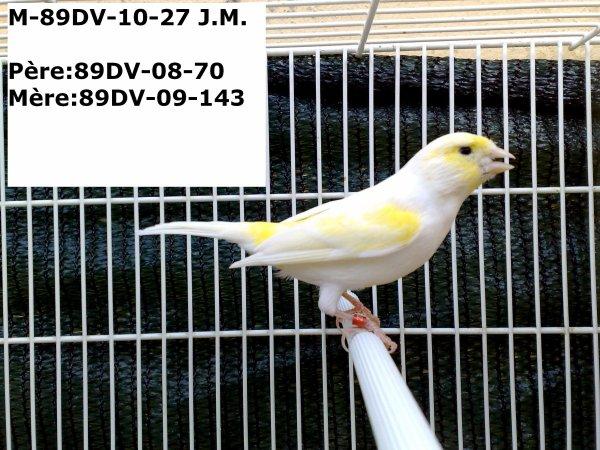 89DV-10-27 M JAUNE MOSAIQUE - GIALLO MOSAICO