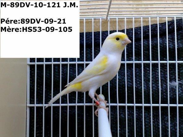89DV-10-121 M JAUNE MOSAIQUE - GIALLO MOSAICO