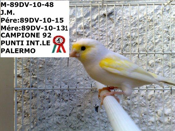 89DV-10-48- MALE JAUNE MOSAIQUE CHAMPION 92 POINTS INDIVIDUEL A PALERME POUR L'INTERNATIONAL 3.700 OISEAUX ENCAGEES
