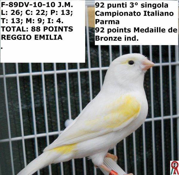 MA FEMELLE JAUNE MOSAIQUE 89DV-10-10 POUR REGGIO 2010 88 POINTS !!!!!?????? ILS ONT FAIT GAGNER DES FEMELLES AVEC UN JAUNE MORT ELLES SEMBLAIENT DES IVOIRES!!!!! MEDAILLE DE BRONZE AU CHAMPIONNAT ITALIEN PARME 2010 92 POINTS INDIVIDUELLE J'AVAIS RAISON