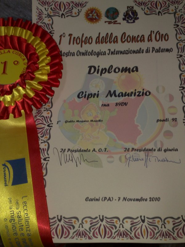 DIPLOME DE CHAMPION INTERNATIONAL PALERME MALE JAUNE MOSAIQUE 92 POINTS INDIVIDUEL