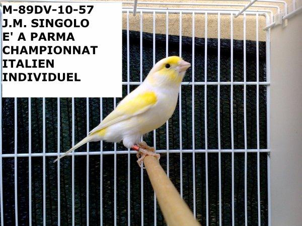 MALE JAUNE MOSAIQUE 89DV-10-57 CHAMPIONNAT ITALIEN PARMA 2010 INDIVIDUEL A LA PLACE DU 115 A CAUSE D'UN ACCIDENT, IL A PRIS 88 POINTS