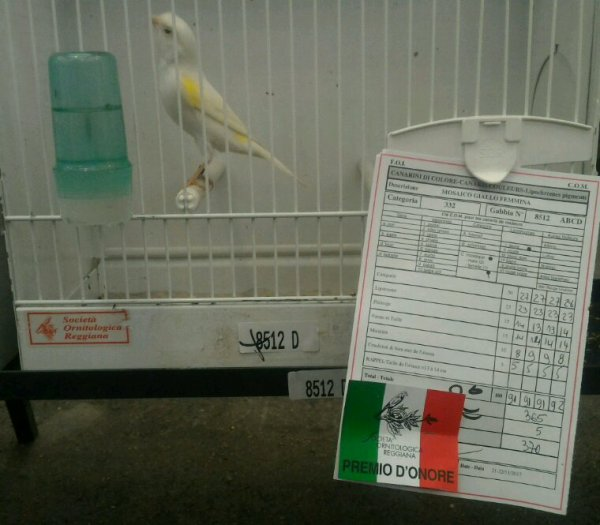 2eme stam femelles j.m. 370 points Int. Reggio Emilia