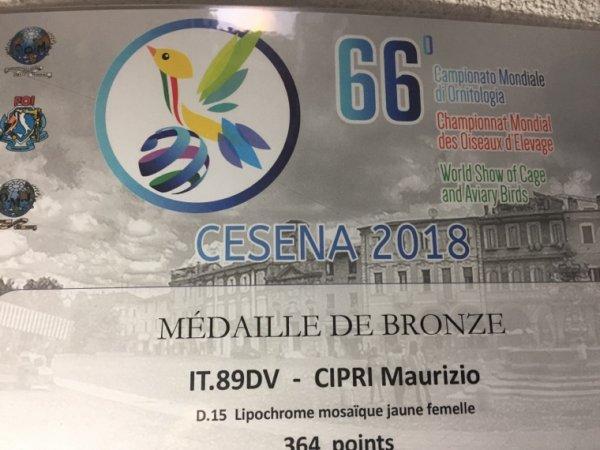 Diplôme médaille de bronze au mondial 2018 jaune mosaïque femelles
