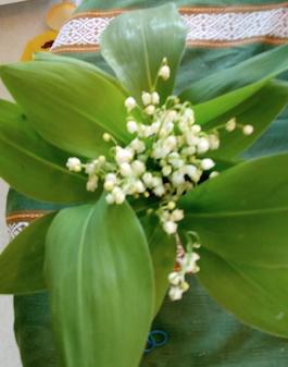 mes fleurs