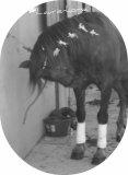 Photo de laurie-horse