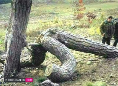 la nature ossi