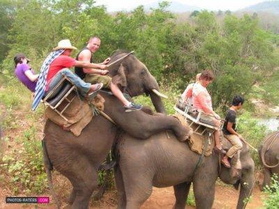 encore les elephants