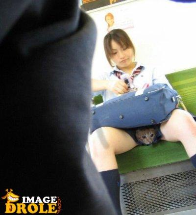 chat entre les jambes
