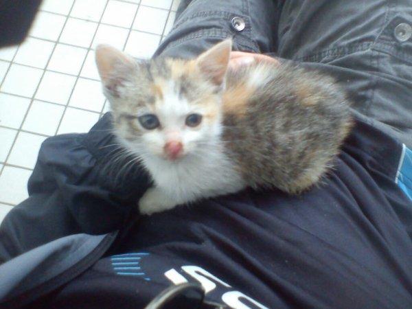 Chat trouvé a meulan pres du petit prince,je lui es trouvé un foyer et tt va bien