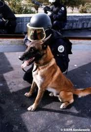 Pool Cynophile les chien du RAID
