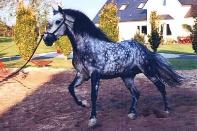 cheval espagnol endurance