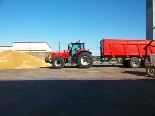 ramasage de blé dans le 47 à leyrizt moncasin